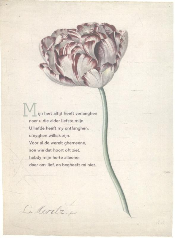 10 poëziekaarten plint met gedicht